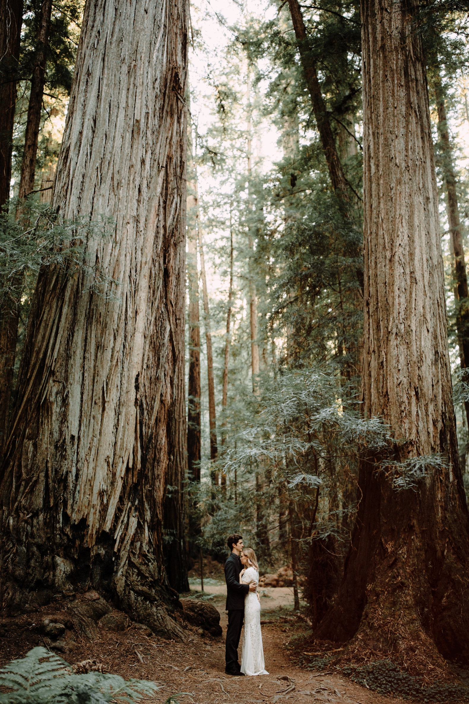 redwood-forest-elopement-0040