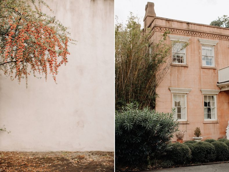 warm distressed wall with beautiful flowers tree and creamy pink historic home